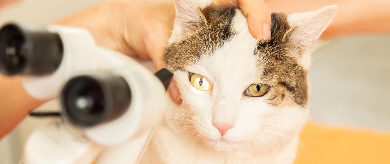 Augenerkrankungen, Augenheilkunde